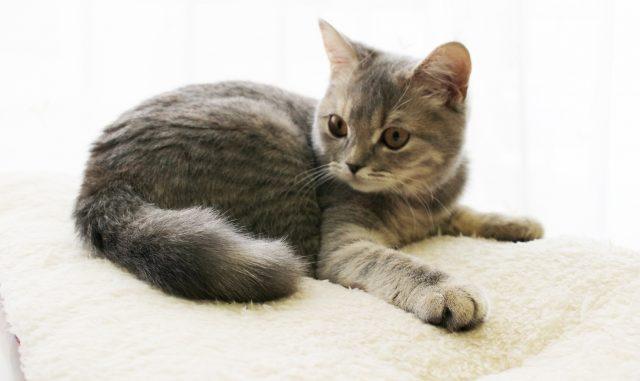 猫のおならが臭い・多いのは病気のサイン!?考えらえる原因と対策まとめ!