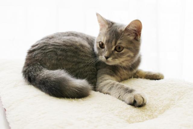 猫のおならが臭い、多い原因①:食べてる食べ物が原因!