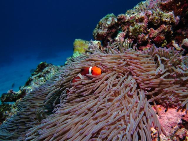 熱帯魚の水槽で気をつけるべきポイント