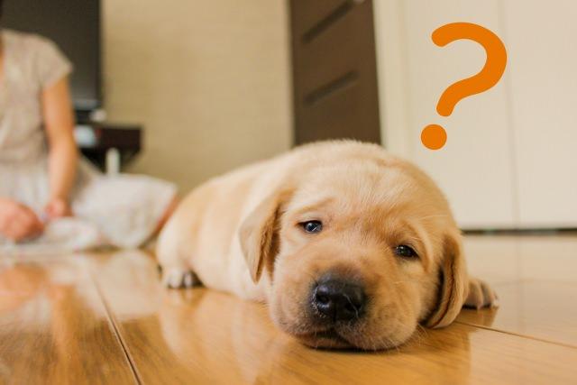 犬に与えるべき餌の量と回数は、犬の年齢によって異なる?