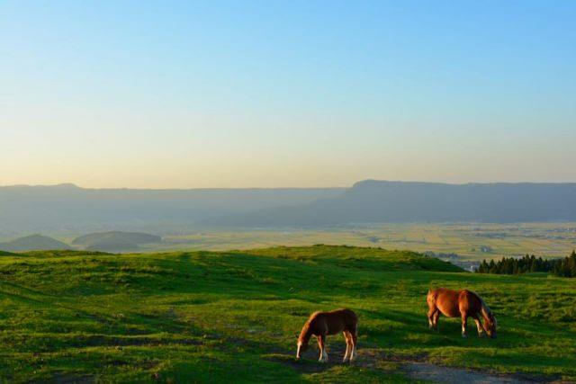 馬は個人でも飼育できるの?