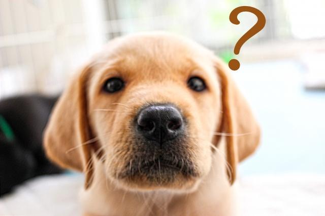 犬が餌を噛まない。こんな場合はしつけを見直すべき!?