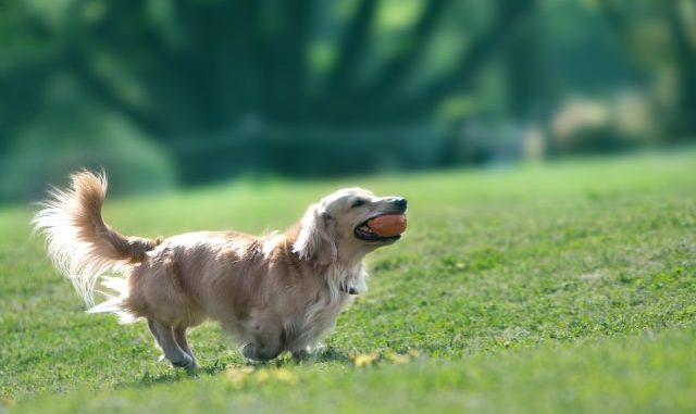 犬の餌はいつまでふやかすべきか知っていますか?