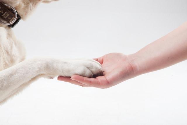 犬にも「いただきます」のしつけをしましょう!