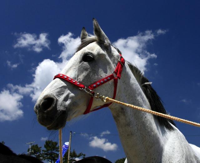 馬を飼育するのに必要な費用って?