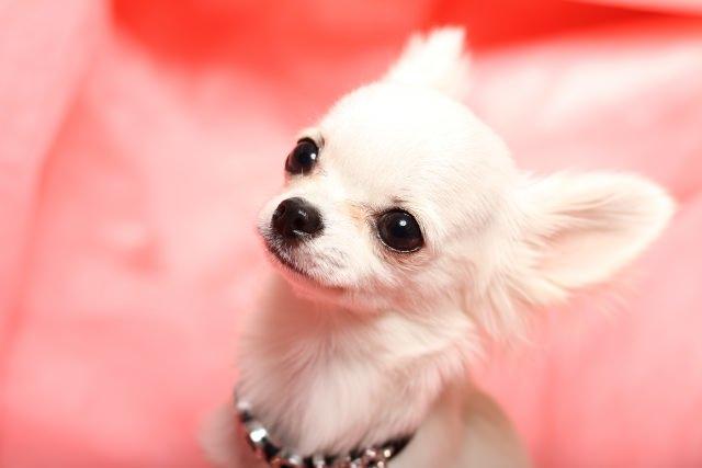 犬が甘噛みする理由を理解し、愛犬の気持ちに沿った行動を!