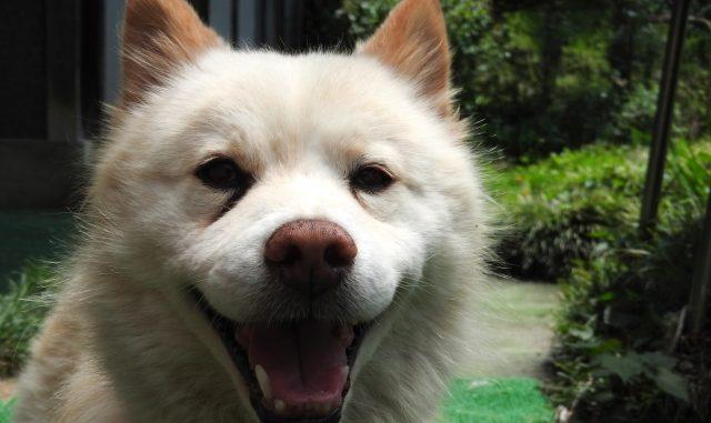 シニア犬・老犬が餌を食べない時の原因と対策方法まとめ!