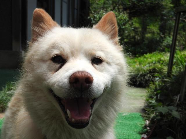 シニアな愛犬が餌を食べるためには、飼い主ができる対策とは?
