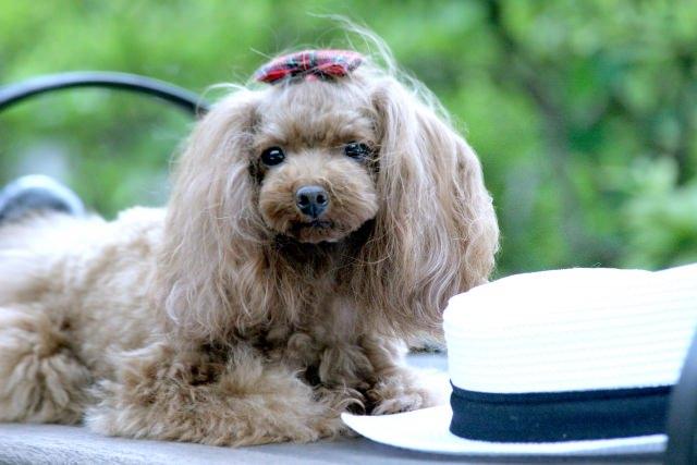 愛犬の健康管理は食事から!飼い主さんが原因に沿った工夫をしてあげましょう!