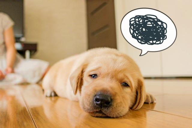 犬が餌を残すのは、病気ではなくしつけが原因!?