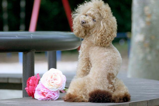 グレインフリーのドッグフードで、愛犬の健康管理を!
