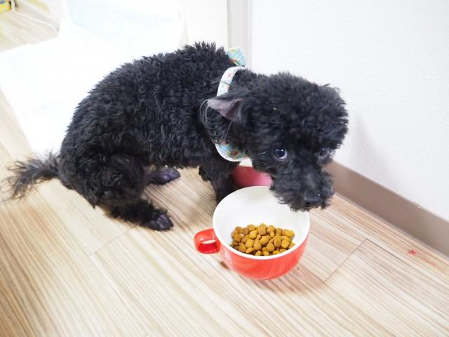 ふやかした餌を犬に与える際の注意点とは?
