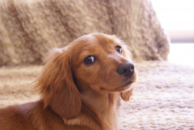 犬が甘噛みがするのは、自然なことなの?意味ってあるの?