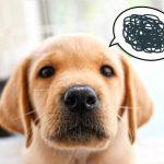 犬の甘噛みに意味や理由ってあるの?犬の心理と気持ちも解説!