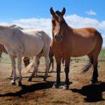 個人でも飼育可能!馬のペットとしての値段をご紹介します!