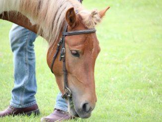 必見!馬の飼育にかかる費用ってどれくらい?あなたの疑問を解決します!