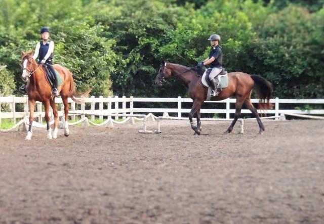 値段の前に・・・そもそも馬ってペットとして飼育できるの?