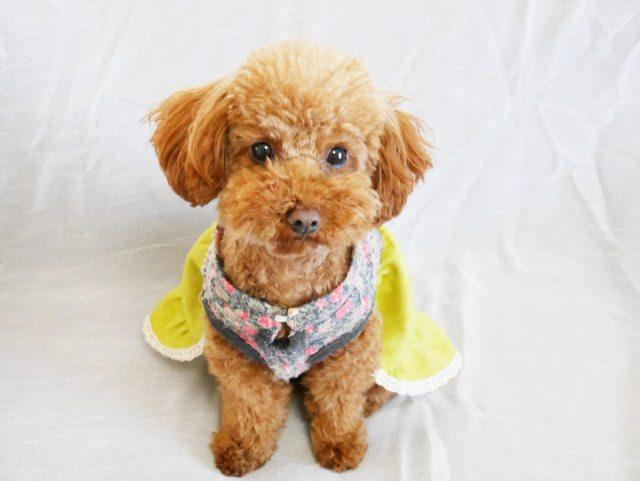 甘噛みする愛犬へのしつけ方法とは?
