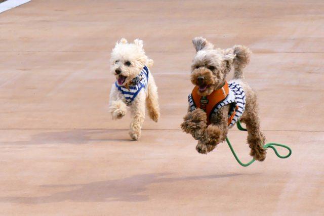 可愛い愛犬の健康のためにも、愛のあるしつけを