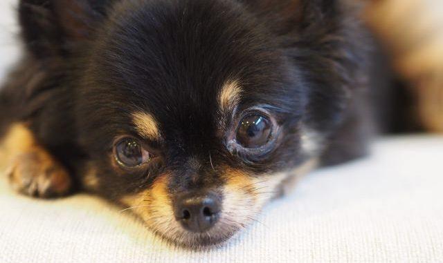 犬へのマイクロチップ装着は危険?危険性とメリットをご紹介!