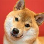 犬に与える餌の量と回数の目安って?犬の食事について徹底解説!