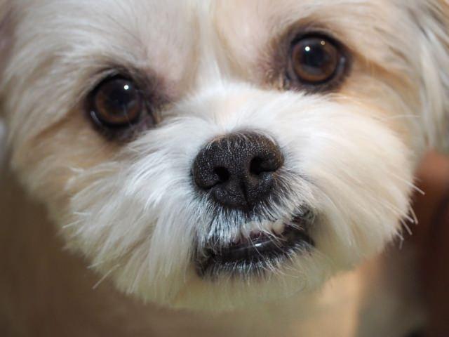 そもそも犬の涙はどのような役割を担っているの