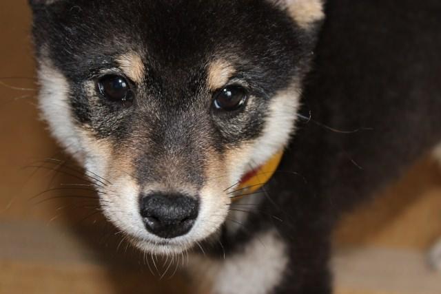 犬の皮膚病は普段の生活の見直しから