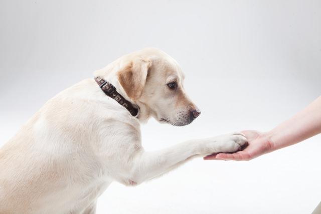 まずは犬が無駄吠えをしてしまう原因を考えよう