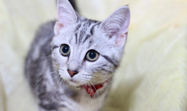 猫の夜泣きがうるさい理由や原因は何?飼い主さんがとるべき対策方法とは?