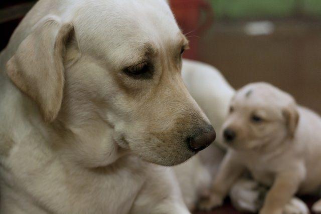 犬の乳腺腫瘍って何?良性と悪性の腫瘍は何が違うの?原因は?