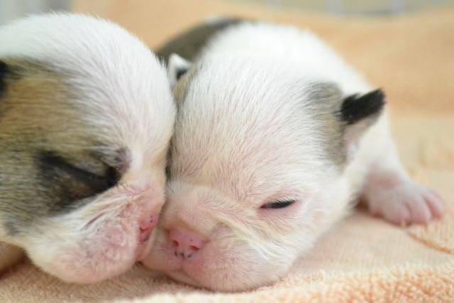 犬の耳掃除を優しく丁寧に行って、病気を予防しよう!