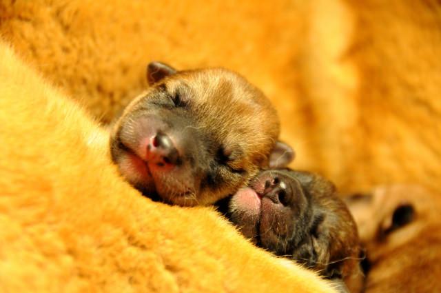 犬の避妊手術前に注意することや準備するものは?