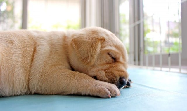 犬の睡眠時間は何時間?睡眠不足になるとどうなるの?