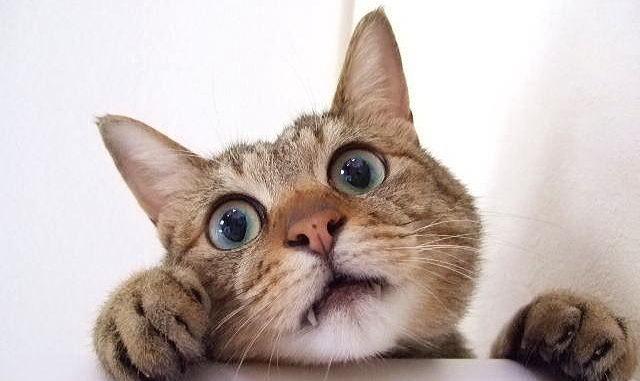 うるさい猫の鳴き声の対策は? しつけが必要な理由としつけ方をまとめてご紹介!