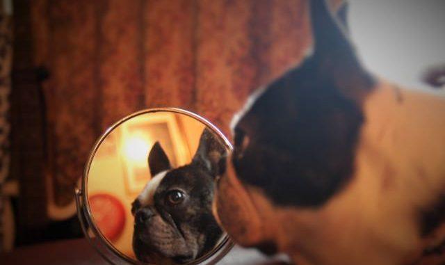 犬の皮膚病にも種類が?症状と予防・治療法までご紹介!