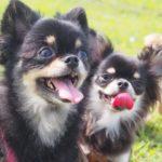 犬の肉球の役割は何?肉球も病気の原因になるって本当?