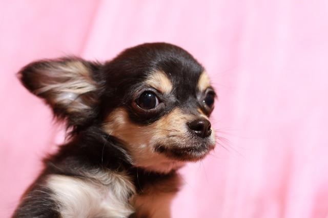 犬の乳腺腫瘍の治療や予防方法はあるの?