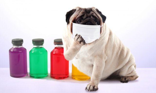 犬にも花粉症が存在する?症状と対策まとめ!