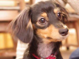 【愛犬家必見】ドッグフードではなく手作りご飯を犬の餌にしたほうが良い理由とは?