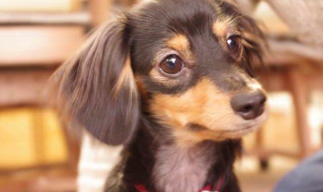 困った犬の無駄吠えを直すしつけ方を知りたくありませんか?