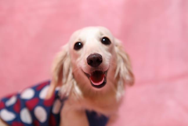 寄生虫の予防・駆除を徹底して愛犬を守ろう!