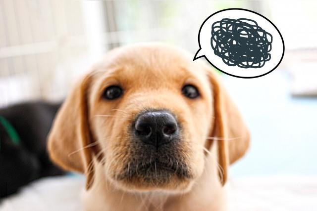 犬の無駄吠えにショック療法はストレスがかかるのでおすすめ出来ません