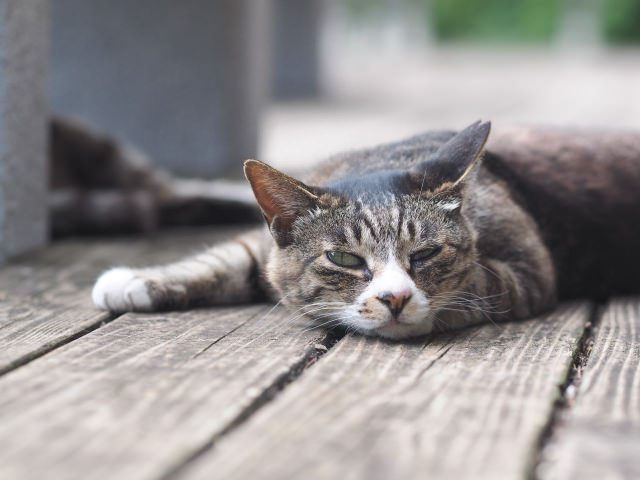 猫のうるさい夜泣きは無視するか遊んで疲れさせるかの2つの対策方法がおすすめ