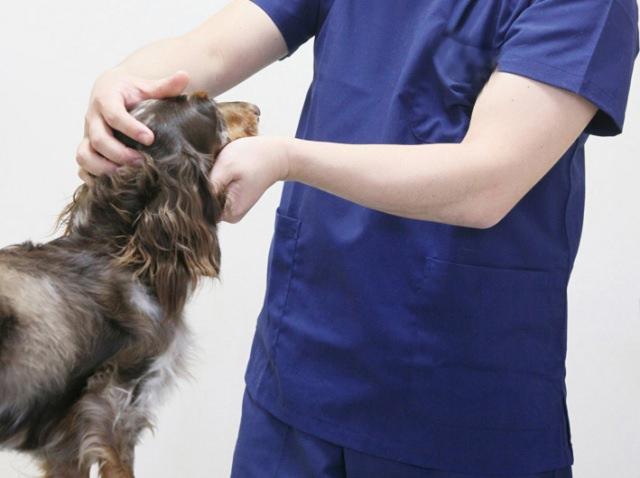 犬にも花粉症があることを理解して、注意してお世話してあげよう!
