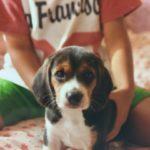 【必見】トイレトレーニングは子犬からしつける方が楽なのは本当?