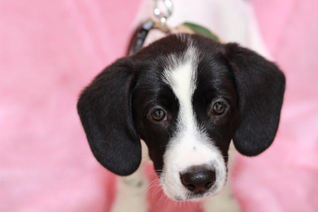 成犬が食糞行動を起こすのは問題。原因は何?