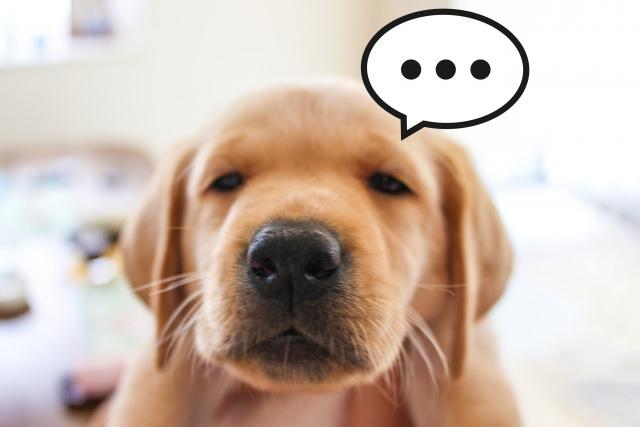 犬の花粉症の症状は人間とは違い皮膚に出る?