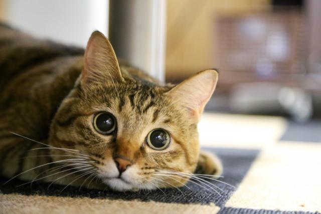 猫がうるさく鳴いてしまう理由は何?鳴き声は寂しさの表れ?