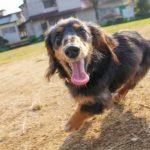 犬の寄生虫にご注意を。種類や予防・駆除方法までご紹介!