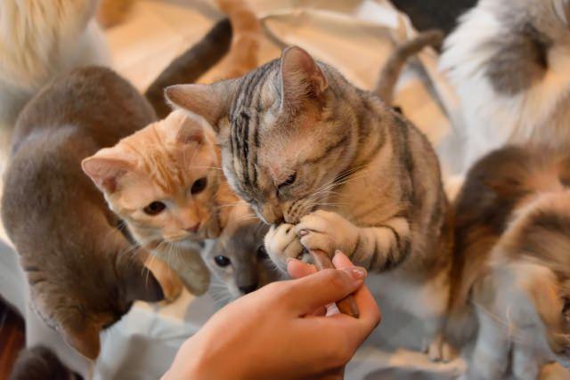 実は猫にはおやつをあげなくても問題ではない!